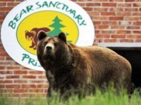 Captive brown bears rescued in Kosovo, ReadyClickAndGo