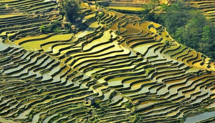 Honghe Rice Terraces, China ReadyClickAndGo