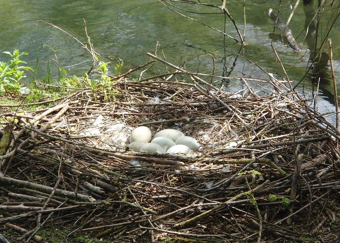 Swan Nest readyclickandgo