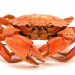 silence of the crab readyclickandgo travel